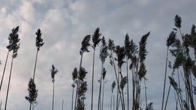 A câmera dispara em ramos das plantas na perspectiva de uma opinião cinzenta do céu a partir de baixo vídeos de arquivo