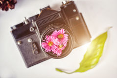 Câmera do filme do vintage, flores cor-de-rosa e filme no fundo branco Fotos de Stock Royalty Free