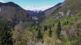 A câmera está voando sobre a floresta densa do pinho em inclinações de montanhas no dia ensolarado filme