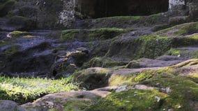 A câmera mostra rocha tropical a inclinação musgo-coberta com a ameia retangular pequena nela filme