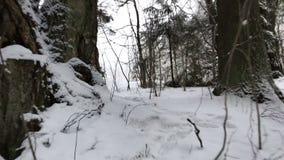A câmera move e toma a floresta do inverno no dia filme