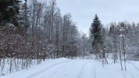 A câmera move e toma a floresta do inverno no dia video estoque
