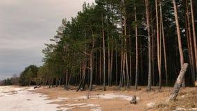 A câmera move e toma imagens de uma paisagem das árvores em um Sandy Beach perto da baía filme