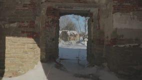 A câmera move-se para a frente e explora-se as ruínas de uma construção de tijolo vermelho velha no inverno Vídeo do POV video estoque