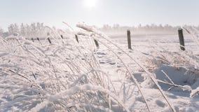 A câmera move-se a partir de baixo tomando um grande campo pontilhado com neve vídeos de arquivo