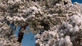 A câmera mover-se-á da direita para a esquerda descolando os ramos de árvore polvilhados com a neve filme