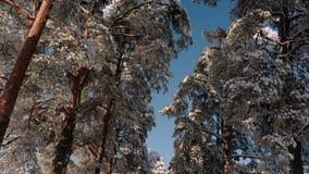 A câmera pega uma parte inferior e oferece uma vista geral da aleia do inverno filme