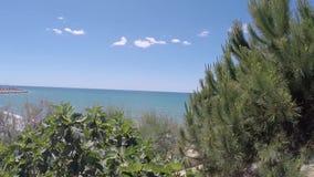 A câmera que andam ao longo dos arbustos do verde e as tentativas pequenas com horizont azul do mar e do céu na luz solar aquecem video estoque