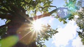 Câmera que gerencie sob as partes superiores da árvore, cobertas com as folhas verdes, sol que brilha através dos ramos, dia de v video estoque