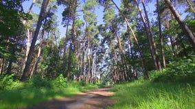 A câmera que gira o baixo ângulo disparou através das árvores da floresta primária video estoque