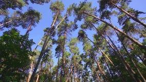 A câmera que gira o baixo ângulo disparou através das árvores da floresta primária filme