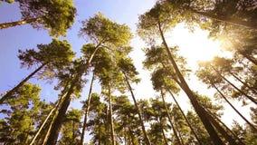 A câmera que gira o baixo ângulo disparou através das árvores da floresta primária vídeos de arquivo