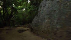 Câmera que move-se na floresta escura filme