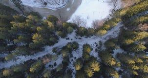 Câmera que olha a pena reta sobre a floresta do abeto do inverno no por do sol Foto de Stock