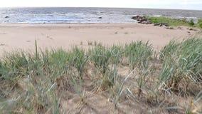 A câmera toma um Sandy Beach com grama e então aumenta e vai ao mar video estoque