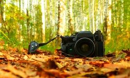 A câmera velha nas madeiras Foto de Stock Royalty Free