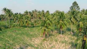 A câmera zumbe dentro floresta bonita enorme da palmeira com folhas filme