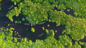 A câmera zumbe no charneca, o verde do pântano com pontos de água, o lago bonito entre os juncos vídeos de arquivo
