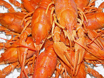 Cânceres, lagostas Imagens de Stock Royalty Free
