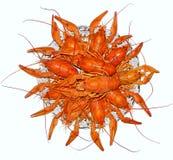 Cânceres, lagostas fervidas Fotografia de Stock