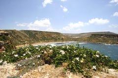 Câpres et plage fleurissantes, Malte Photos libres de droits
