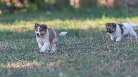 cães Foto de Stock Royalty Free