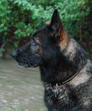 Cães 20 Fotos de Stock Royalty Free