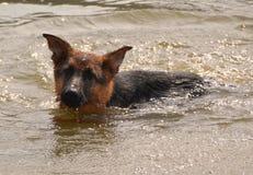Cães 76 Imagens de Stock