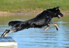 Cães 86 Fotos de Stock Royalty Free