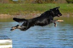 Cães 92 Imagem de Stock Royalty Free