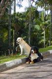 cães Imagens de Stock Royalty Free