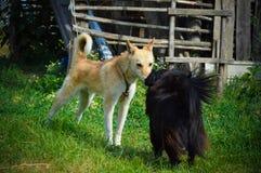 cães Fotos de Stock