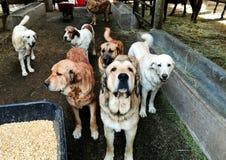cães Imagens de Stock