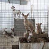 Cães abandonados Imagens de Stock