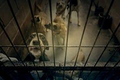 Cães abandonados tristes Fotos de Stock Royalty Free