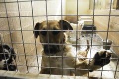 Cães abandonados tristes Imagem de Stock