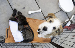 Cães abandonados tristes Fotografia de Stock