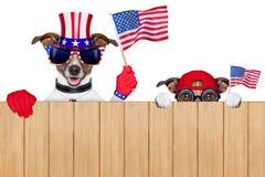 Cães americanos Fotografia de Stock