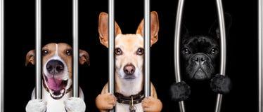 Cães atrás das barras na prisão da cadeia fotografia de stock