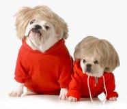 Cães bonitos Fotografia de Stock