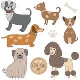 Cães bonitos ajustados ilustração do vetor