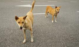 Cães com fome da rua fotografia de stock