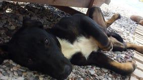 Cães da praia fotografia de stock