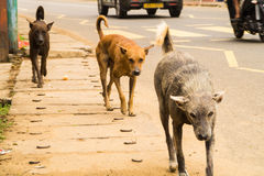 Cães da rua imagens de stock royalty free