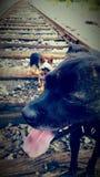 Cães da trilha do trem Imagens de Stock Royalty Free