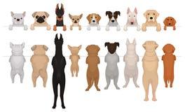 Cães das raças diferentes que penduram na beira Retratos dos focinhos com patas e corpos completos Vista dianteira e traseira lis ilustração do vetor