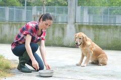 Cães de alimentação voluntários do abrigo animal fotografia de stock