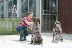 Cães de alimentação voluntários do abrigo animal fotos de stock