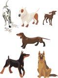 Cães de animal de estimação Imagem de Stock Royalty Free