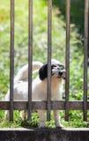 Cães de espera atrás da cerca fotografia de stock royalty free